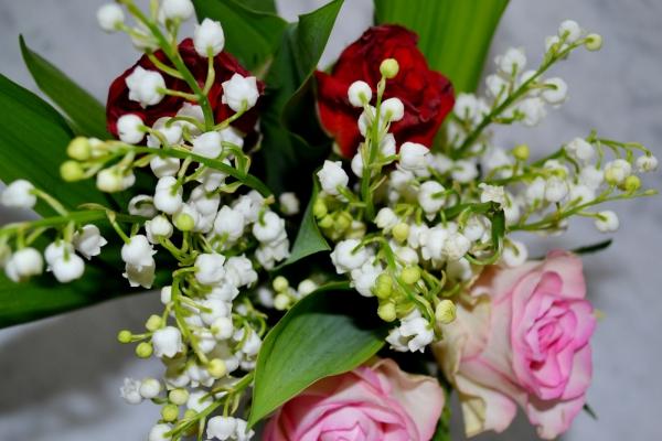 planter du muguet roses et muguet