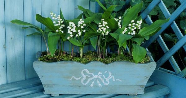 planter du muguet une jolie jardinière