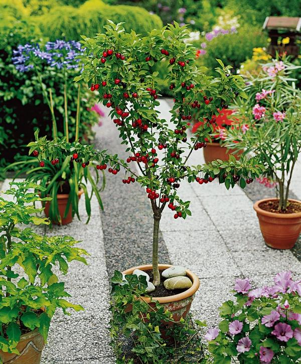 planter un cerisier parmi les fleurs