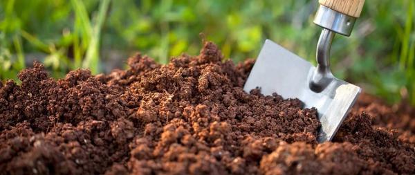 planter un cerisier préparer le sol