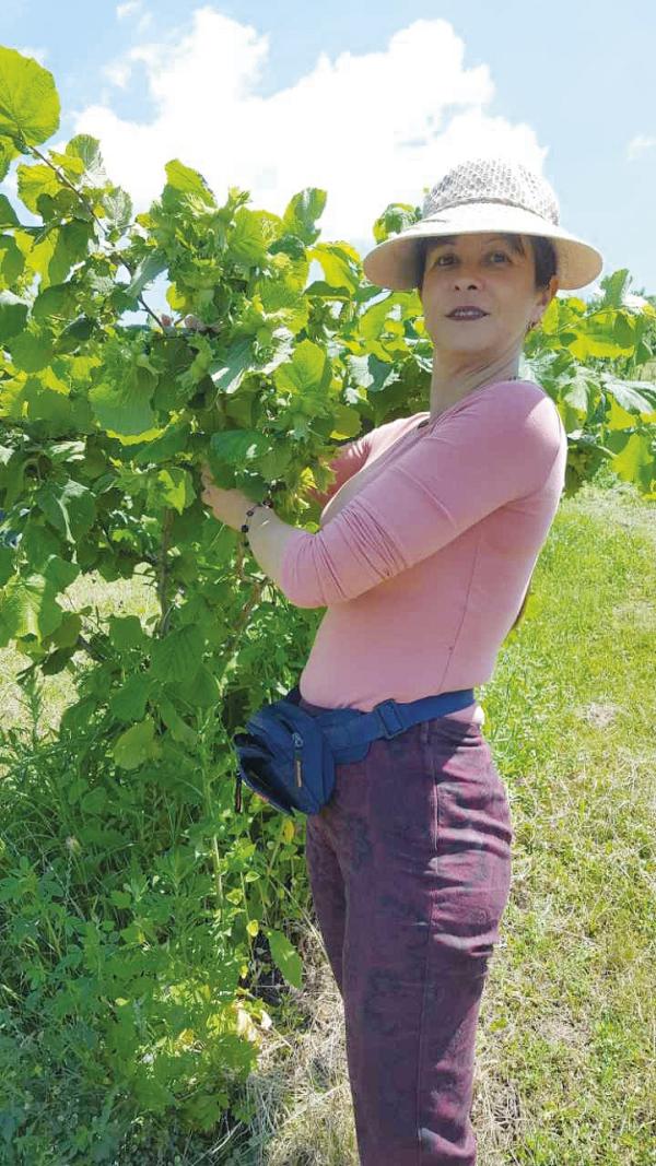 planter un noisetier moment de récolter