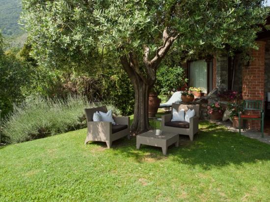 planter un olivier coin repos