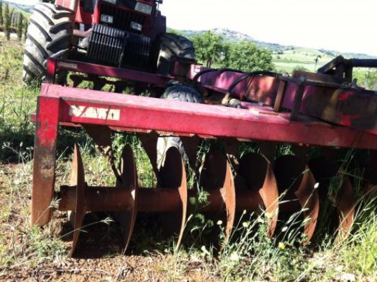planter un olivier cultiver la terre