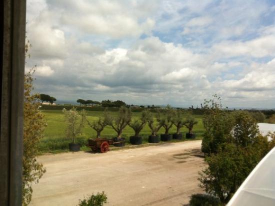 planter un olivier dans une pépinière