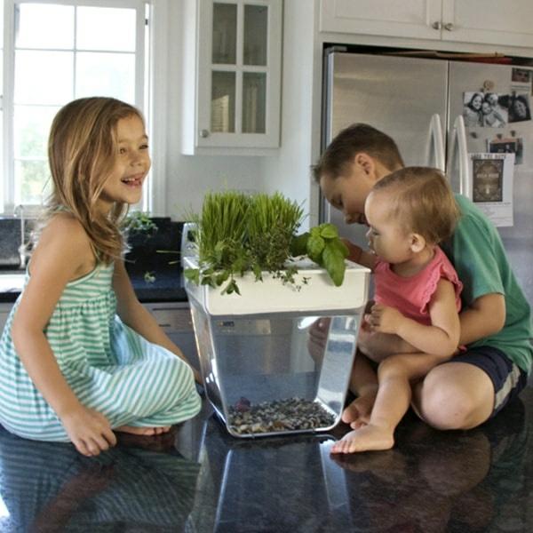 poissons et plantes maison système aquaponique