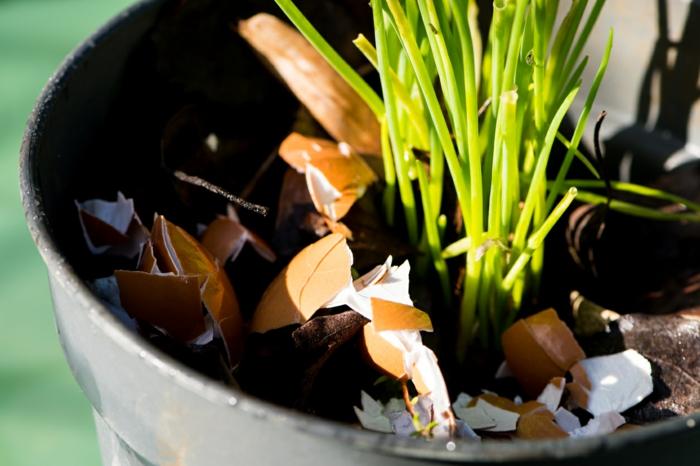 coquille-doeuf-dans-les-plantes
