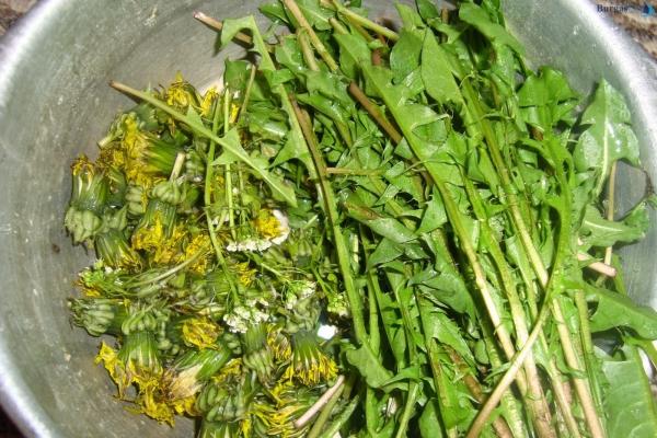 fatigue de printemps fleurs et feuilles de pissenlit