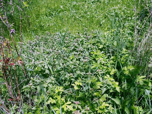 fatigue de printemps herbes médicinales