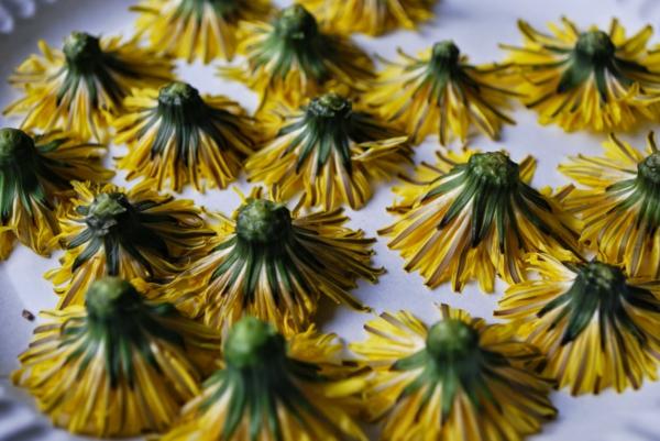 fleurs séchées de pissenlit