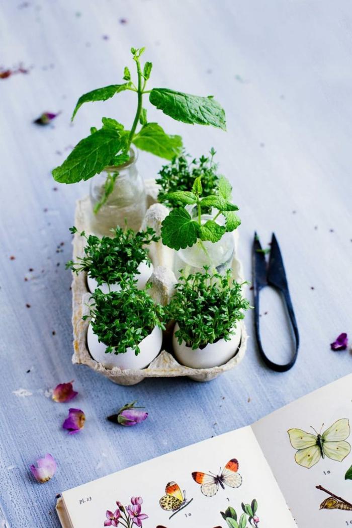 idées avec coquille d'oeuf jardinage