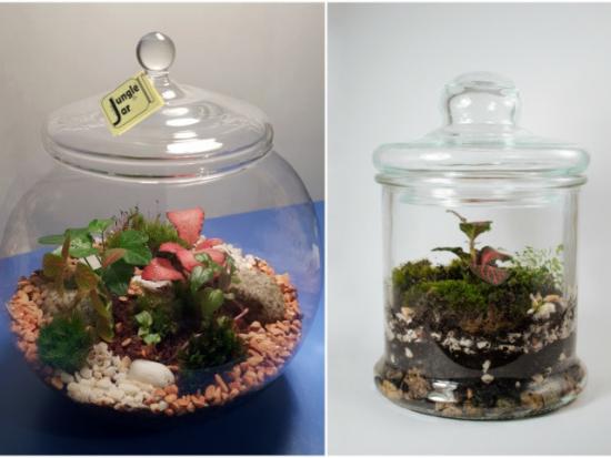 instaurer le bien-être à la maison jungle jar