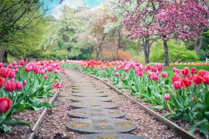 tulipes au jardin conseils comment planter et entretenir
