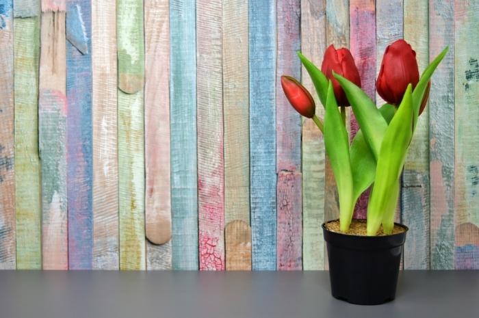 tulipes dans un pot conseils
