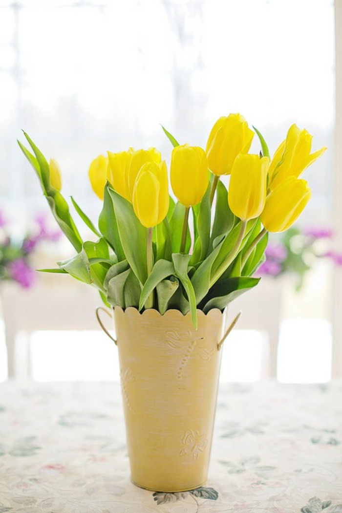 tulipes intérieur printemps