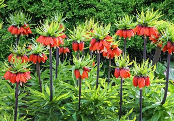 12 astuces malignes pour chasser les taupes du jardin au naturel cultiver des plantes répulsives