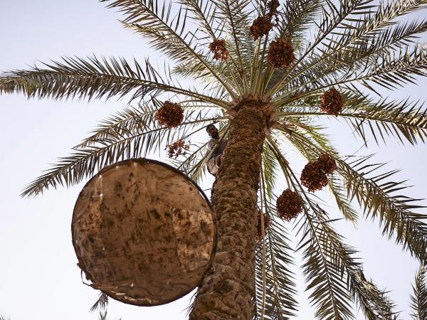 dattes un haut palmier