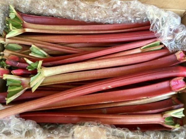 idées de recettes à la rhubarbe
