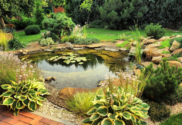 jardin vivant biodiversité étang