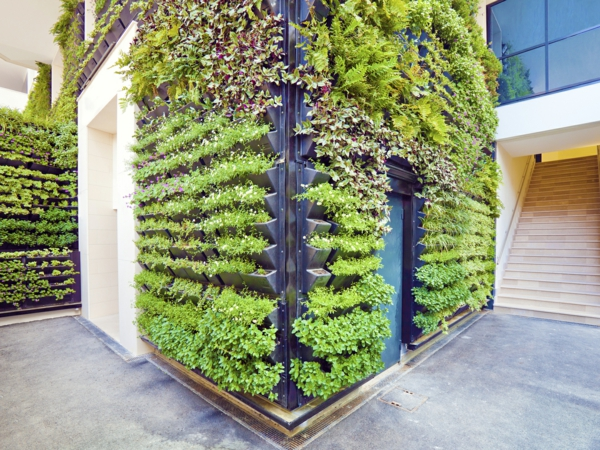 jardin vivant biodiversité mur végétal