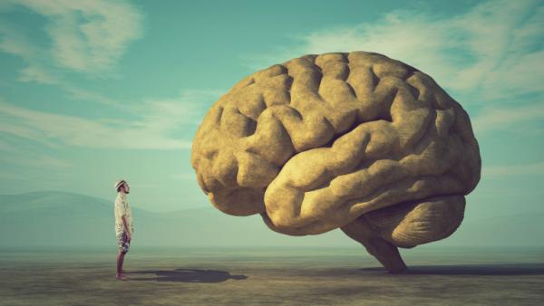 maladie d' Alzheimer modèle du cerveau