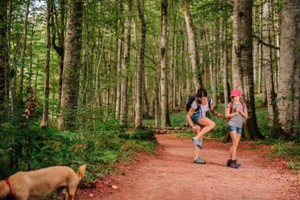 éloigner les moustiques une randonnée dans la forêt