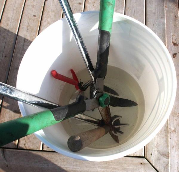 5 façons d'utiliser le savon de Castille dans le jardin nettoyage d'outils de jardinage