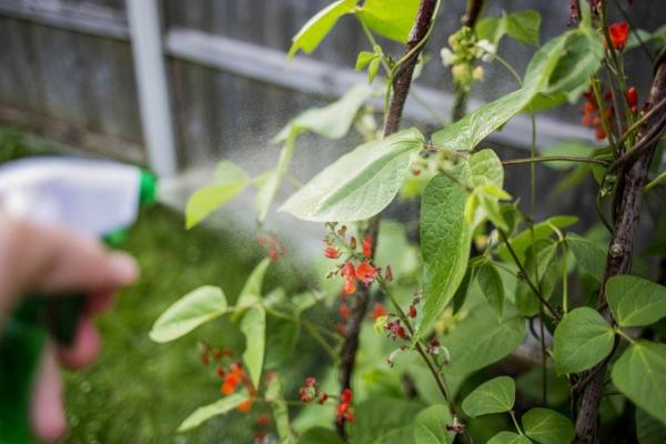 5 façons d'utiliser le savon de Castille dans le jardin pulvériser du liquide insecticide