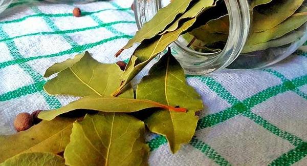 Anti-fourmis naturel sans danger pour enfants et animaux domestiques feuilles de laurier