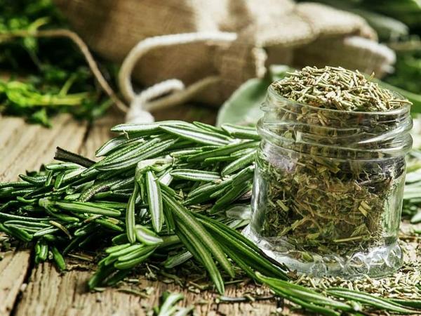 Comment cultiver le romarin herbe séchée