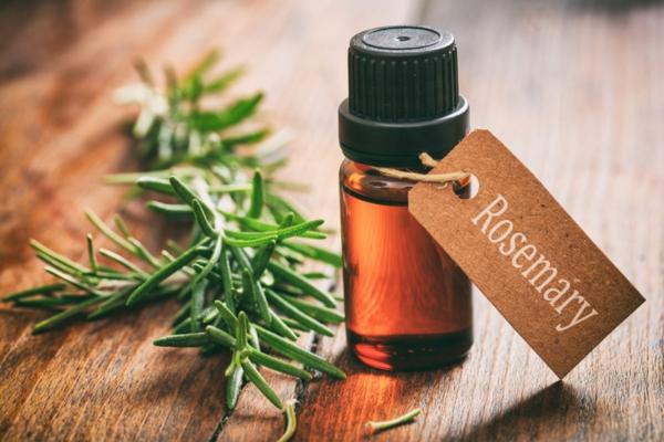 Comment cultiver le romarin huile essentielle