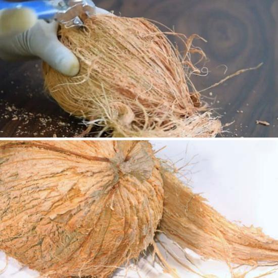 Comment fabriquer vous-même de la tourbe de coco décortiquer la noix de coco
