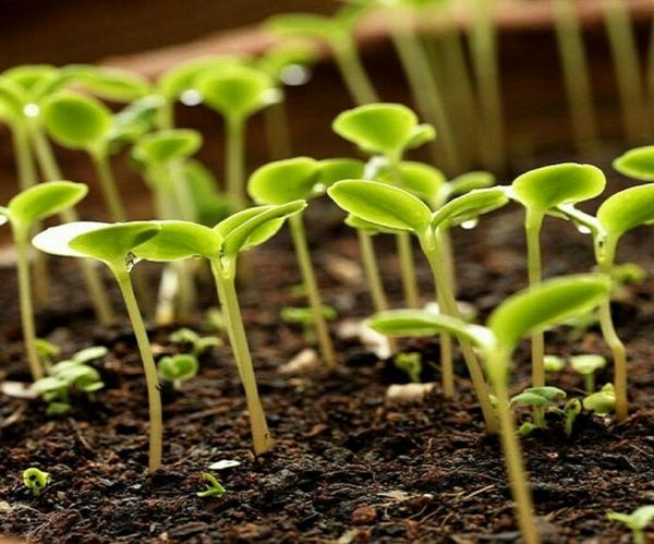 Eau oxygénée 20 utilisations dans la maison et le jardin accélérer la germination des graines