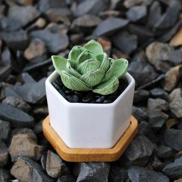 Idée cadeau maîtresse pour dire merci à la fin de l'année scolaire plante succulente diy