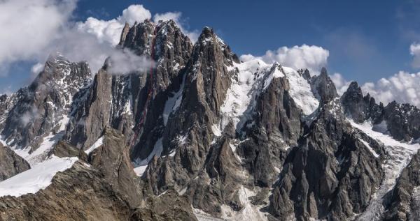 Terminalia arjuna l'Himalaya
