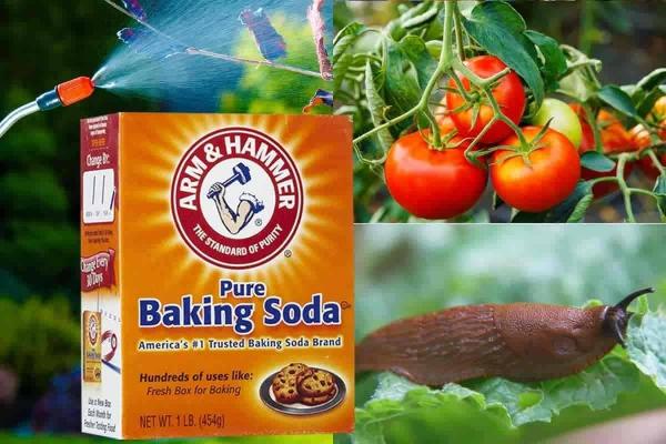 bicarbonate de soude consistance pure