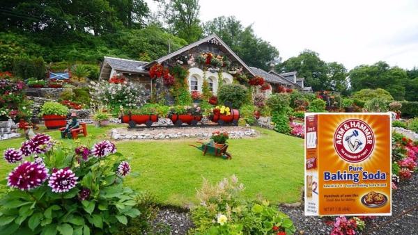 bicarbonate de soude le jardin rêvé