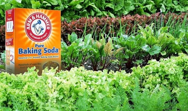 bicarbonate de soude plantes fraîches