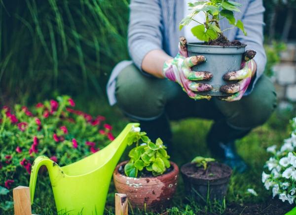 bicarbonate de soude pour le jardinage