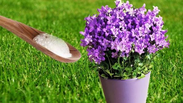 bicarbonate de soude pour les fleurs aussi