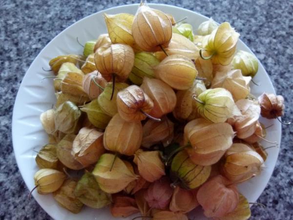 fruit physalis avec les enveloppes