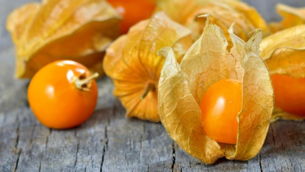 fruit physalis type mexicain