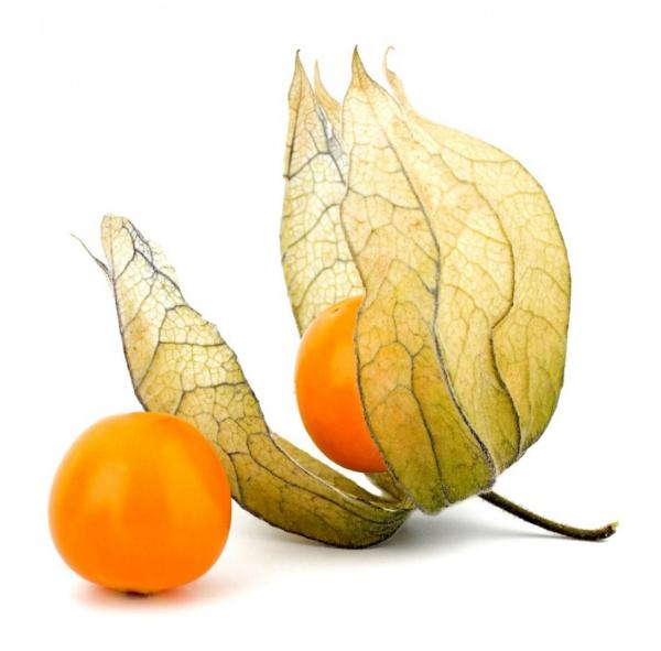 fruit physalis une enveloppe légère