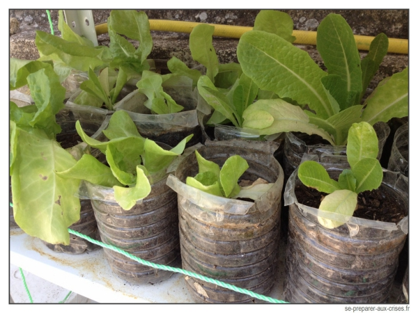 le radis cultiver en pot