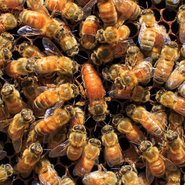 serviettes de cuisine et emballage cire d'abeille