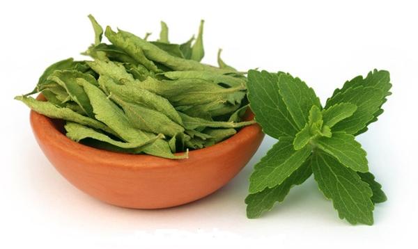 stévia sucre feuilles séchées