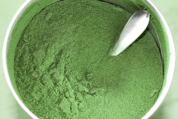 traitement allergies algue bleu-vert
