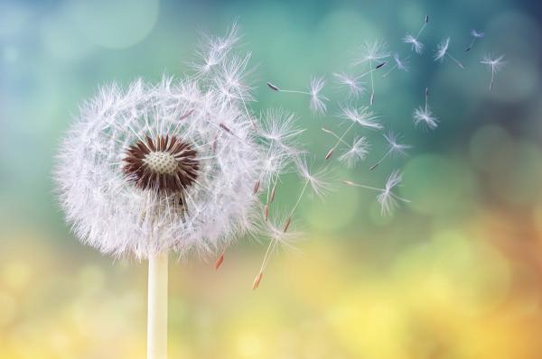 traitement allergies saison du pollen