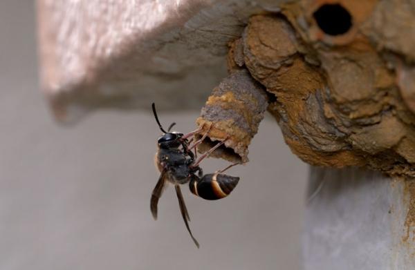 abri d'insectes nid de guêpes