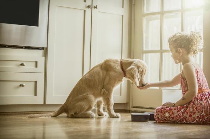 alimentation idée comment rafraîchir un chien