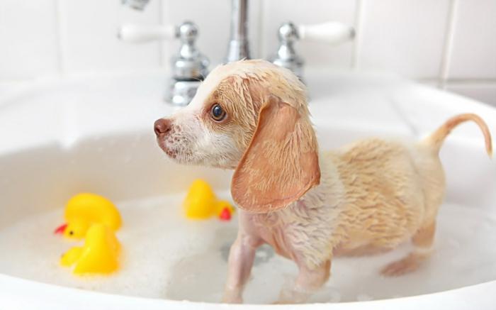 chien sous la douche comment rafraîchir un chien en été